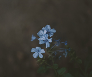 blue, photographers on tumblr, and flower image