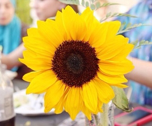 flowers, tumblr, and sunflower image