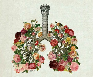 flowers, lungs, and art image