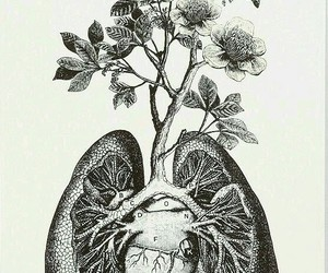 anatomical, floral, and flowers image
