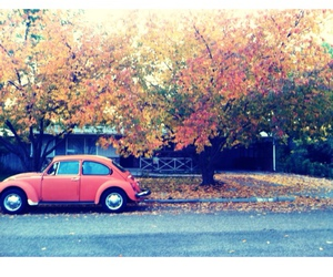 fall and hipster image