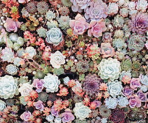 beauty, colors, and succulents image