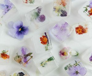 flowers, ice, and ice cube image