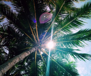 bright, palm, and sky image