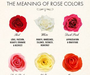 rose, flowers, and meaning image