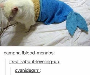 kitten, tumblr, and funny image