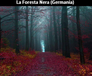 black forest and germany image