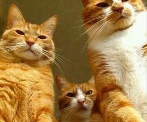 cat and pet image