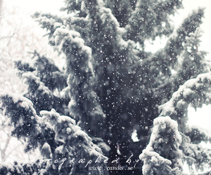 beautiful, bokeh, and first snow image