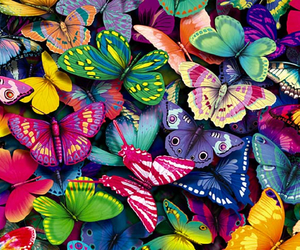 butterfly and colors image