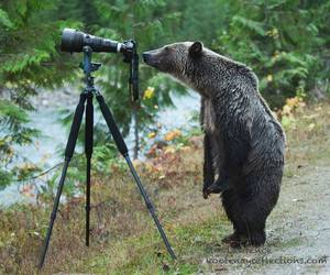 grizzly photographer image