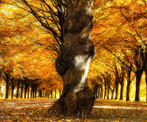 fall, tree, and park image