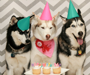 birthday, dog, and dogs image