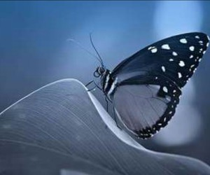 butterfly and elegant image