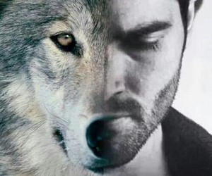 teen wolf, wolf, and derek hale image