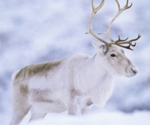 animal and winter image