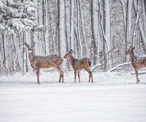 deer, nature, and winter image