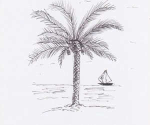 palm tree and vannizza image