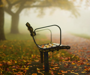 autumn, bc, and bench image