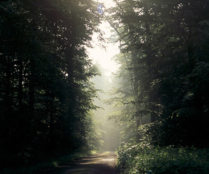 forest, hipster, and grunge image