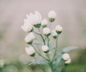 flowers, vintage, and love image