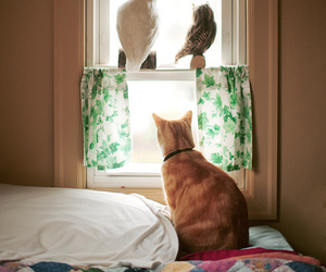 bedroom, cat, and hipster image