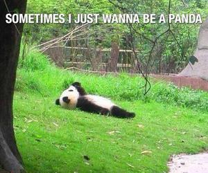 panda, Lazy, and funny image