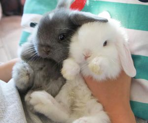 bunnies, cute overload, and fluffy image
