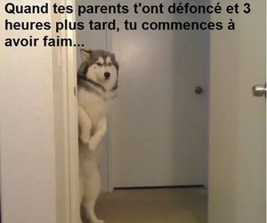parents, mdr, and faim image