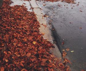 autumn, beautiful, and hobo image