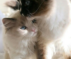cats and friends image