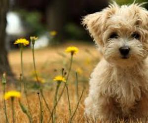 adorable, outside, and puppy image