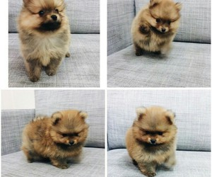 puppy, adorable, and animal image