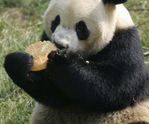 cake, panda, and cute image