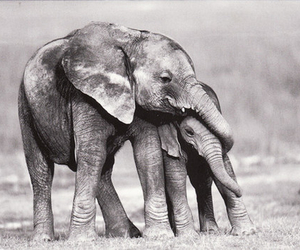 adore, brother, and elephant image