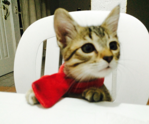 cat and redscarf image