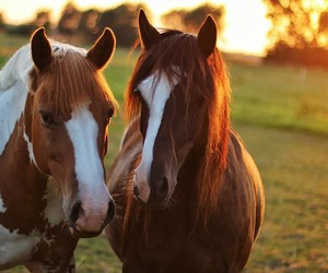 horse, horses, and nature image