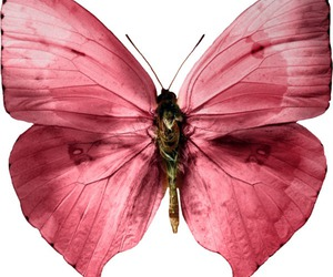 pink and butterfly image