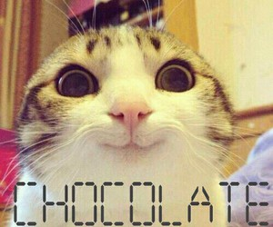 cat, chocolate, and eyes image