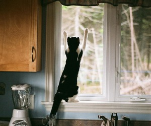 cat, window, and cute image