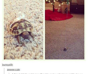 funny, cute, and tumblr image