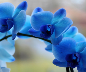 flowers, цветы, and blue image