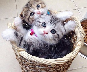 cat, kitten, and sweet image