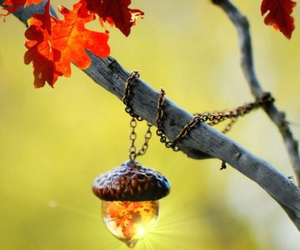 autumn, branch, and nature image