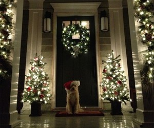 christmas, lights, and dog image
