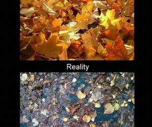 funny, reality, and autumn image