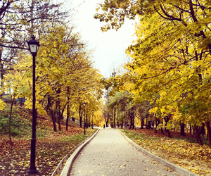 autumn, park, and gold image