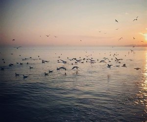 birds, sky, and sun image