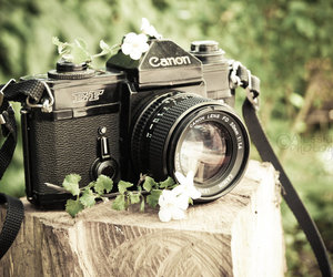 camera, canon, and vintage image
