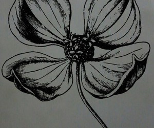 black and white, four, and leaf image